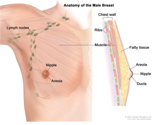 Questions Answered: Can Men Develop Breast Cancer?